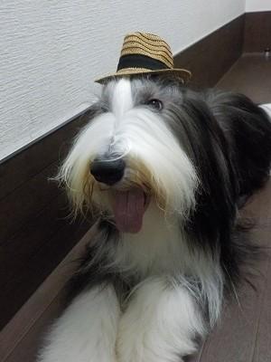 『この帽子ぼく欲しいなー!』