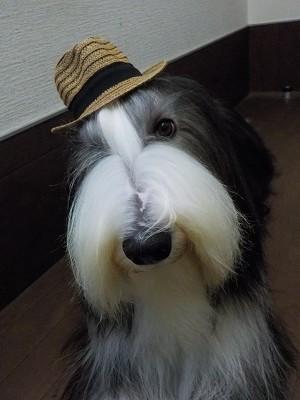 『この帽子はボクが一番似合うでしょ☆』