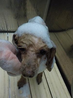 お風呂気持ちいいのよね~