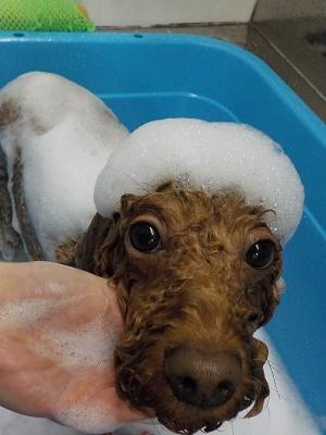 お風呂も良い子♬
