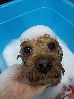 お風呂中も可愛いくね☆