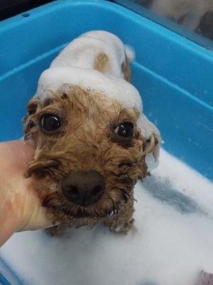 お風呂もお利口さん♬
