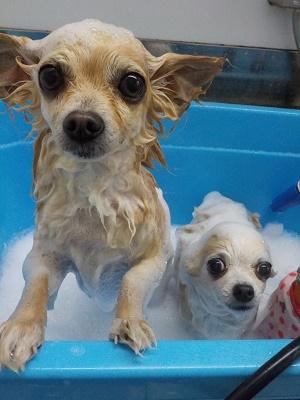 二人仲良くお風呂♬