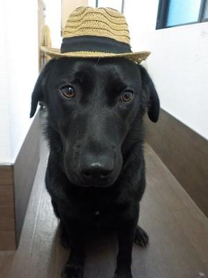 『帽子似合うでしょ♪』