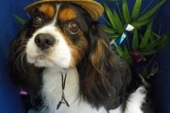 『この帽子良いなー!』