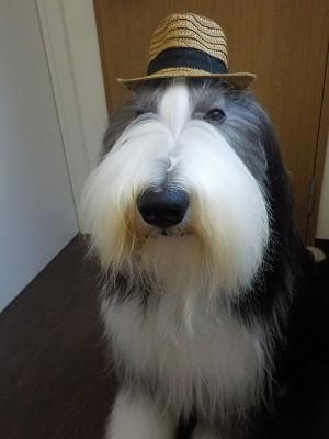 『今回は帽子だね☆』