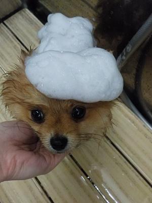 泡のお帽子♪