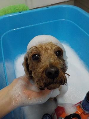 お風呂気持ちいね♪